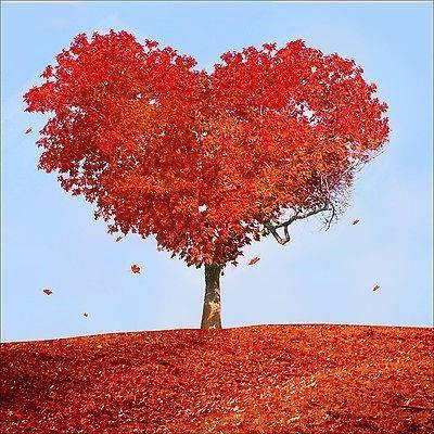 Sticker mural autocollant d co arbre coeur achat for Autocollant mural arbre