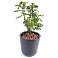 plantes artificielles tati