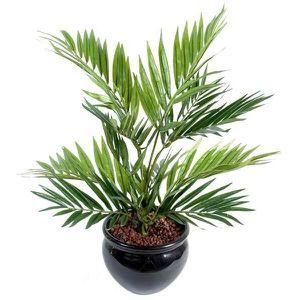 Plante palmier achat vente plante palmier pas cher for Plante artificielle palmier