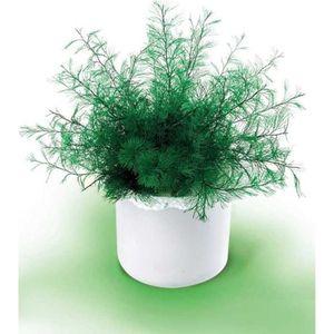plantes achat vente plantes pas cher cdiscount. Black Bedroom Furniture Sets. Home Design Ideas
