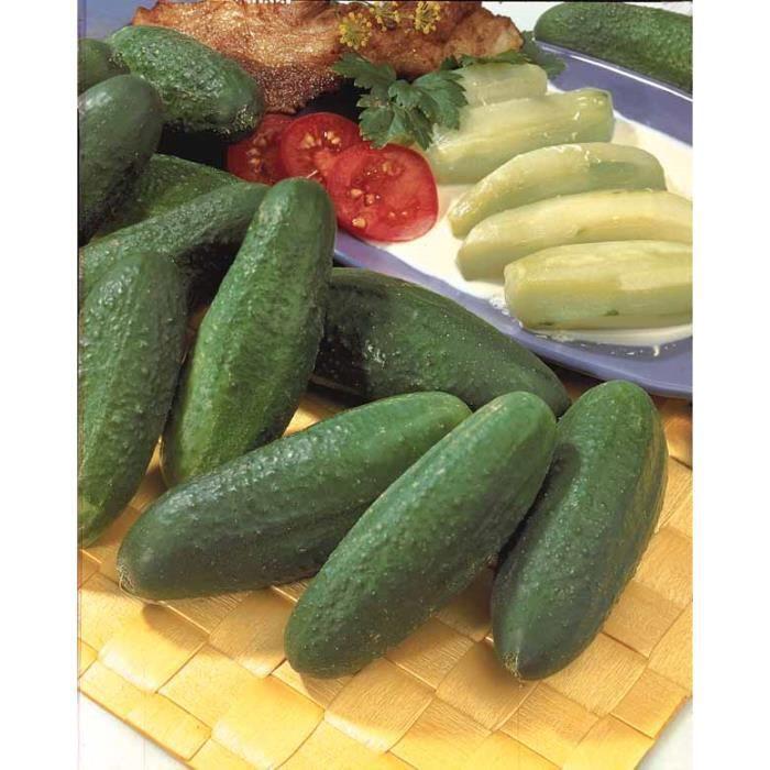 Cornichon ou concombre 39 d licatesse 39 achat vente graine semence cornichon ou concombre - Variete de cornichon ...