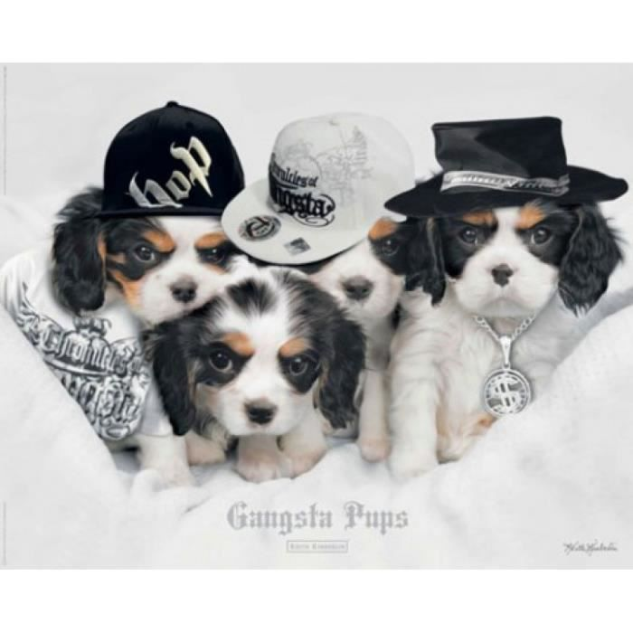 Chiens mini poster chiots gangsta rap keith achat for Achat maison rap