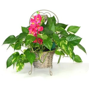 porte plante achat vente porte plante pas cher les soldes sur cdiscount cdiscount. Black Bedroom Furniture Sets. Home Design Ideas