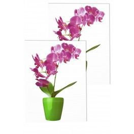 Stickers deco vitres orchidee sauvage achat vente for Decoration vitres fenetres