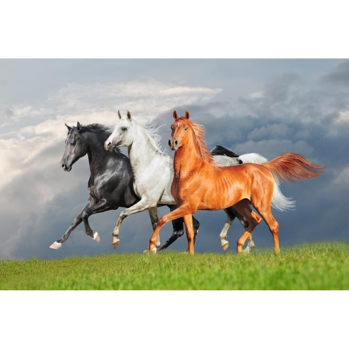 poster cheval achat vente poster cheval pas cher les soldes sur cdiscount cdiscount. Black Bedroom Furniture Sets. Home Design Ideas