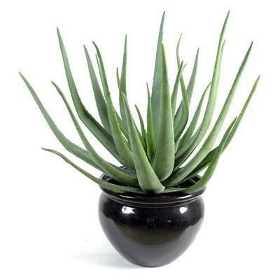 Plante verte artificielle aloevera 70cm taille 70 cm for Plante 70 cm