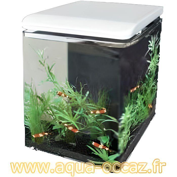 Aquarium eau douce pas cher for Recherche aquarium pas cher