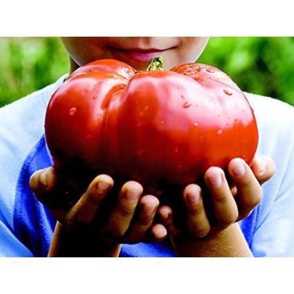 Graines de tomate geante rouge lot de 10 graines achat vente graine semence graines de - Comment recuperer des graines de tomates ...