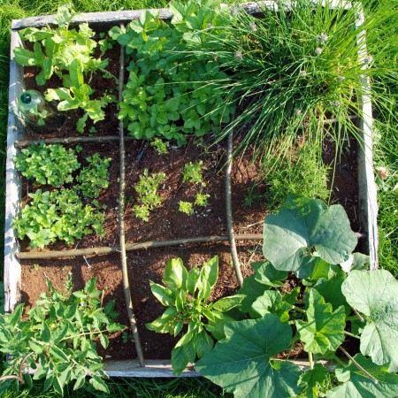 Kit semences pour carr potager achat vente graine semence kit semences pour carr pot for Achat carre potager