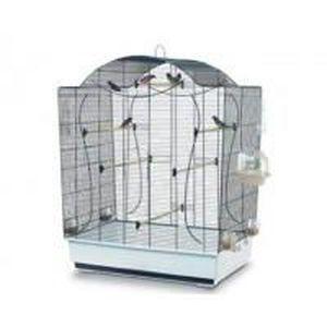 oiseau pied de cage achat vente oiseau pied de cage pas cher cdiscount. Black Bedroom Furniture Sets. Home Design Ideas
