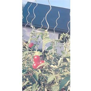 tuteur tomate achat vente tuteur tomate pas cher cdiscount. Black Bedroom Furniture Sets. Home Design Ideas