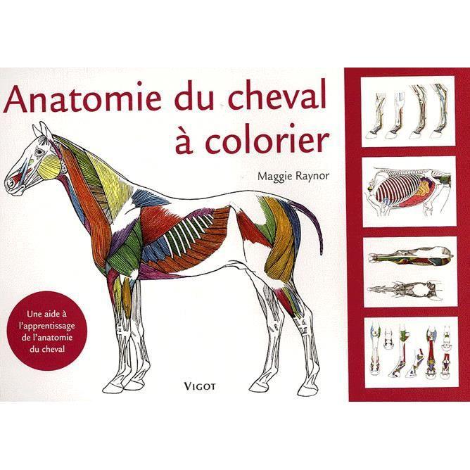 Anatomie du cheval colorier achat vente livre maggie for Anatomie du meuble