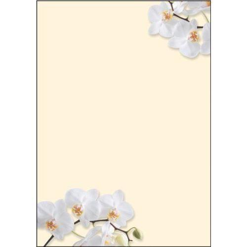 sigel dp904 lot de 50 feuilles de papier lettre a4 90 g orchid es blanches import allemagne. Black Bedroom Furniture Sets. Home Design Ideas