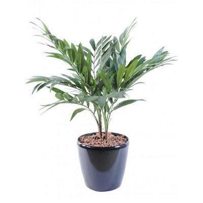 plante verte artificielle palmier parlour 65cm achat