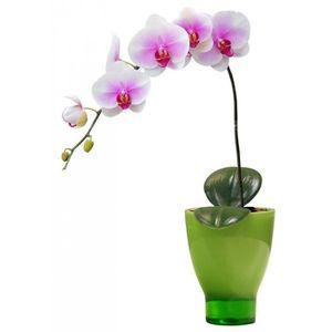 Pot orchidees achat vente pot orchidees pas cher cdiscount - Arrosage orchidee en pot ...