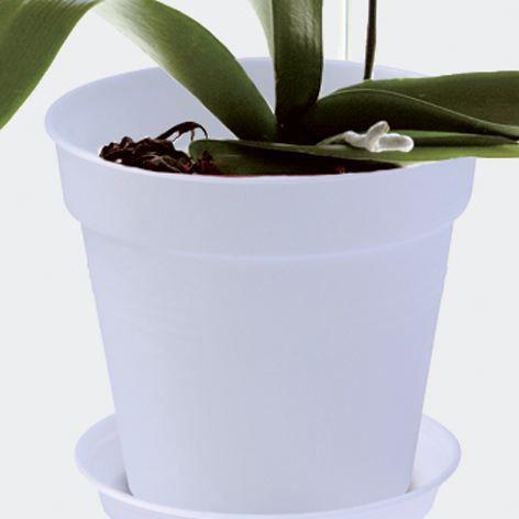 Elho pot de fleurs orchid es provence 15cm achat vente - Doit on couper les tiges des orchidees ...