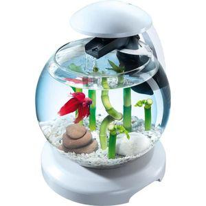Aquarium combattant achat vente aquarium combattant for Aquarium design pas cher