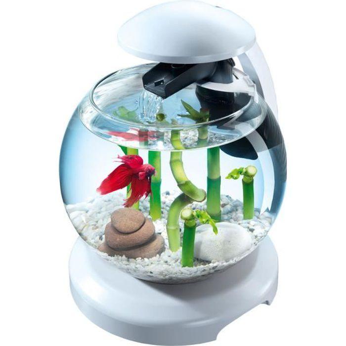 décoration aquarium rond
