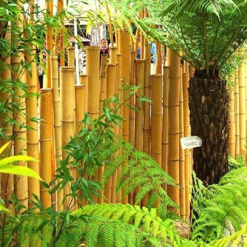 Cl Ture D Corative Multi Usages En Tige De Bambou Achat