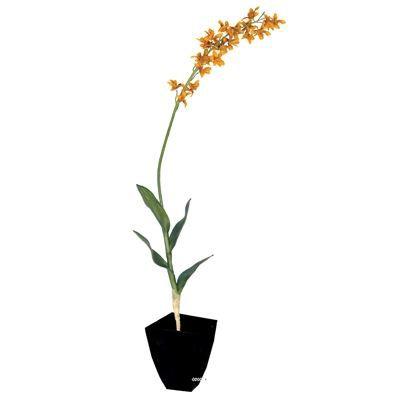 Plante orchidee cambria h90 cm artificielle safran achat vente fleur artificielle s ch e for Plante 90 cm