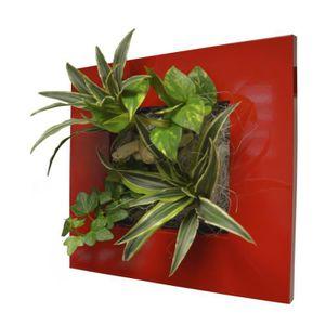 Cadre vegetal achat vente cadre vegetal pas cher les for Cadre mural plantes