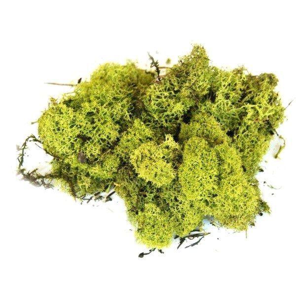 mousse et lichen achat vente mousse et lichen pas cher cdiscount. Black Bedroom Furniture Sets. Home Design Ideas