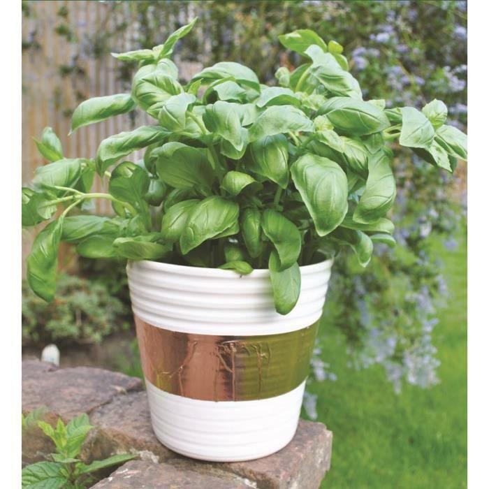 bande de cuivre limaces 4m prot ge vos plantes contre les limaces achat vente pi ge nuisible. Black Bedroom Furniture Sets. Home Design Ideas