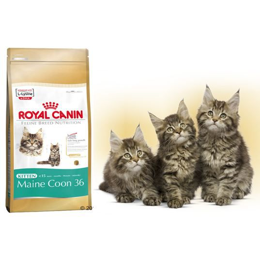 croquettes royal canin kitten maine coon achat vente. Black Bedroom Furniture Sets. Home Design Ideas