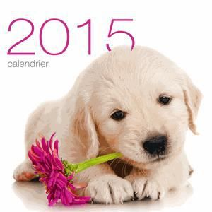 Calendrier mural chiens 2015 achat vente livre for Calendrier mural pas cher