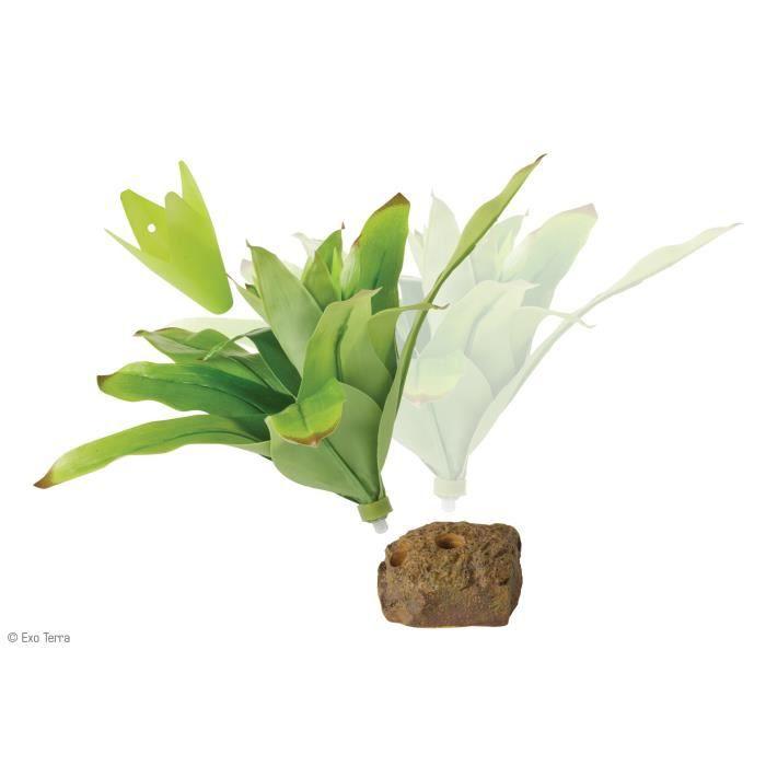 D coration plante brom lia mm reptiles amphibiens achat for Plante bromelia