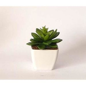 plante grasse artificielle achat vente plante grasse. Black Bedroom Furniture Sets. Home Design Ideas