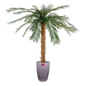 Palmier a planter achat vente palmier a planter pas for Palmier artificiel moins cher