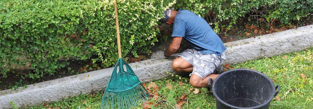 homme en train d'arracher les mauvaises herbes
