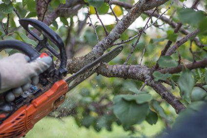 Tron onneuse achat vente tron onneuse pas cher soldes d s le 10 janvier cdiscount - Comment se debarrasser des fourmis sur les arbres fruitiers ...