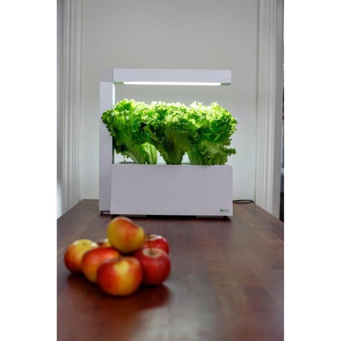 Tregren Herbie 6 Plantes, Jardinière D'Intérieur Autonome Pour