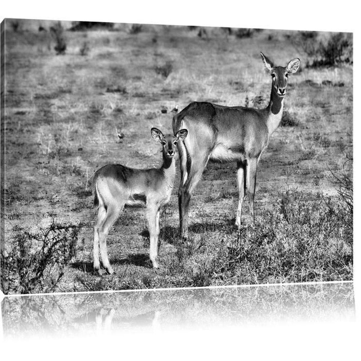 tableau gazelle