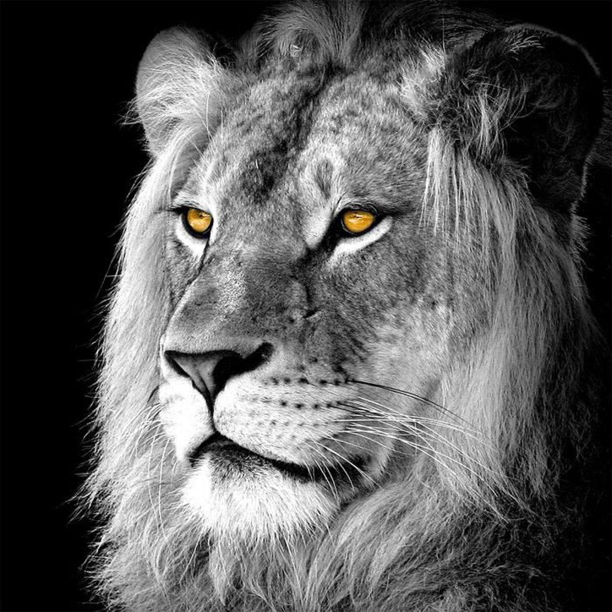 Toile imprimée Lion Noir & Blanc 90 x 90 cm Noir,Blanc - Achat ...