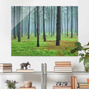 CADRE PHOTO 75x100 cm photo en verre - forêt profonde de pins