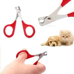 Protege griffe chat achat vente pas cher - Couper les ongles des chats ...