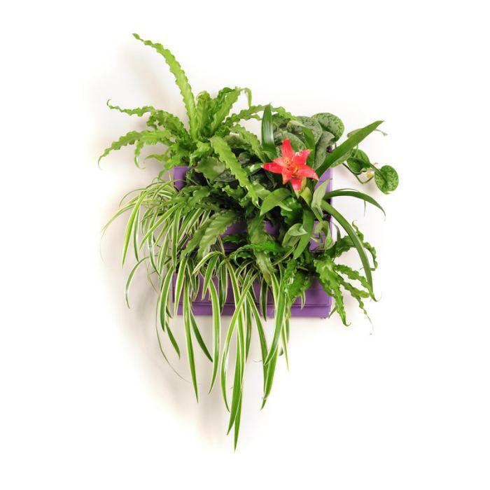 Jardin vertical int rieur et ext rieur parme achat vente jardini re pot fleur mur et - Jardin vertical exterieur ...