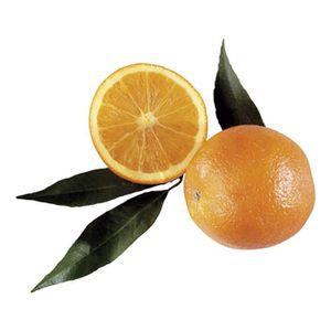 AGRUMES  Oranges Navel Powel (filet) - Origine Espagne - Ca