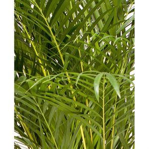 Plantes achat vente plantes pas cher cdiscount for Mini plante pas cher