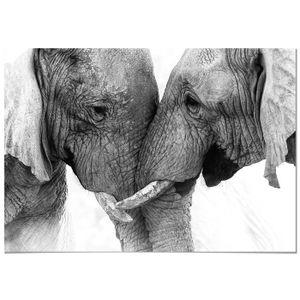 TABLEAU - TOILE Panorama® Tableau Couple Éléphants 30x21cm - Impri