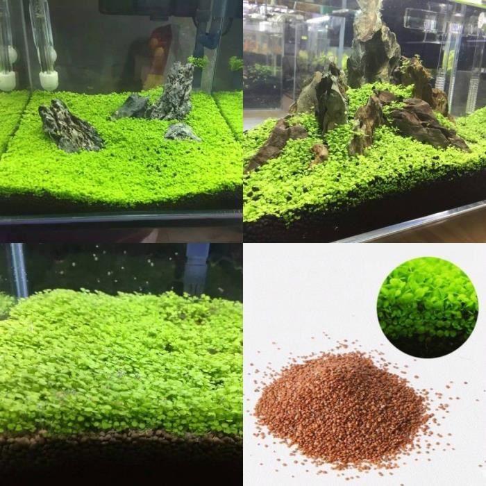 racine aquarium pas cher atlub