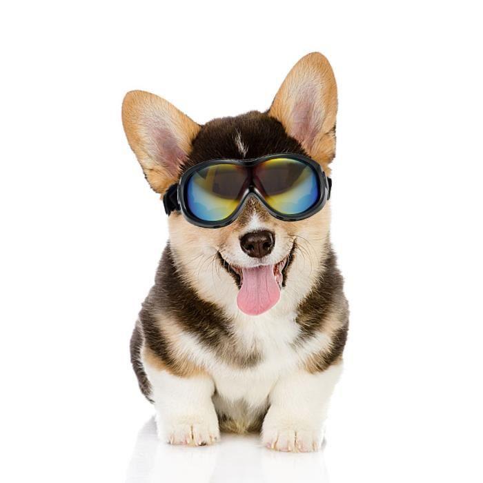 240f74b2bd3a9 Lunettes pour chien Anti-brouillard Lunettes de protection des yeux Lunettes  de soleil UV imperméable Noir Ski Lunettes de sécurité