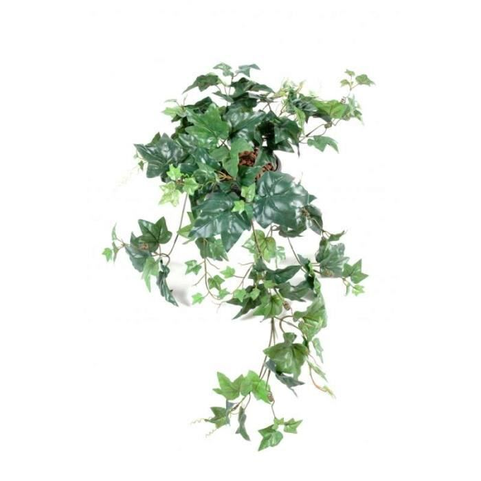 plante verte en anglais