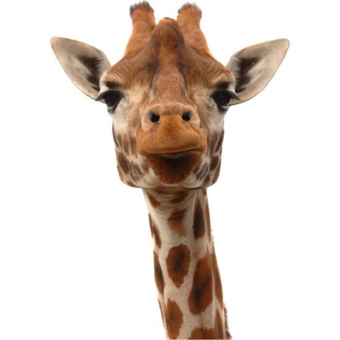 sticker animal t te de girafe dimensions 72x1 achat. Black Bedroom Furniture Sets. Home Design Ideas
