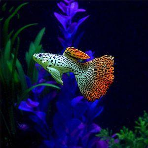 Achat Poisson D Aquarium plastique natation faux or faux poissons d'aquarium d'aquarium décor