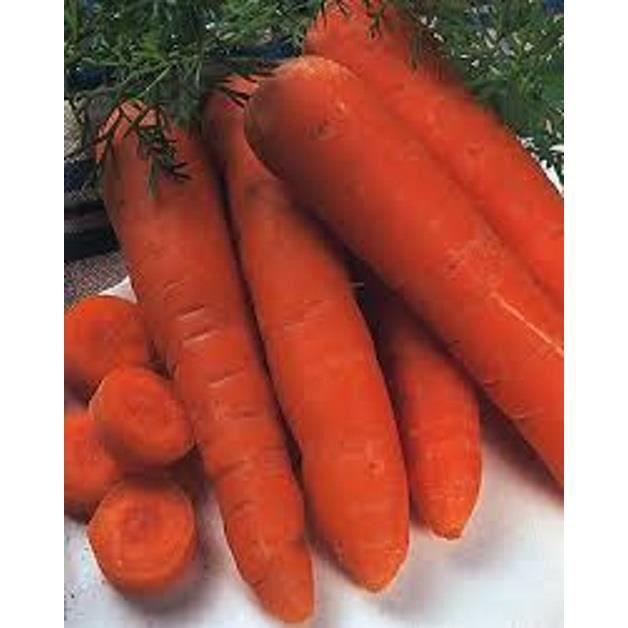1200  graines Graines de carotte « Marché de Paris »