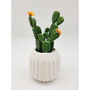 PLANTE POUSSÉE Cactus fleuri dans son contenant Scandinave - H 16